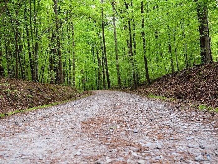 Duke Forest Trail Durham NC Image