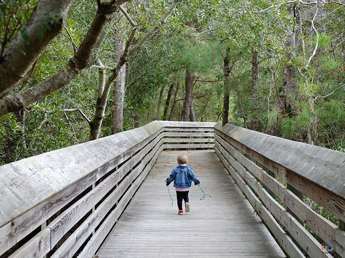 Hiking North Carolina Nags Head Woods Outer Banks Image