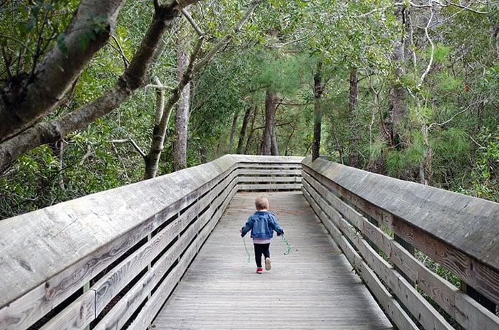 Nags Head Woods Boardwalk