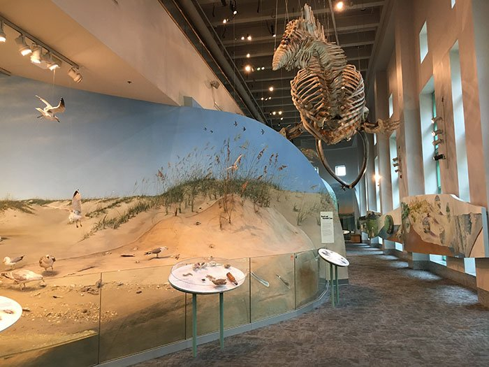 NC Museum of Natural Sciences Raleigh