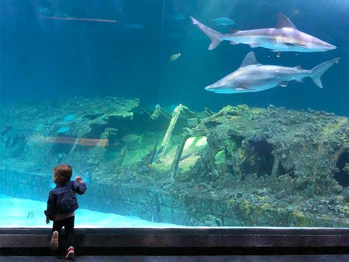North Carolina Museums NC Aquarium on Roanoke Island Image