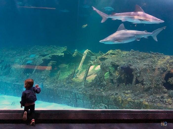 Childrens Museums NC Aquarium on Roanoke Island