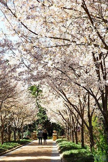 Things to Do in North Carolina Sarah P Duke Gardens Spring Image
