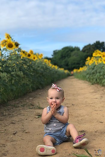 Raleigh North Carolina Free Things to Do Dix Park Sunflowers Image