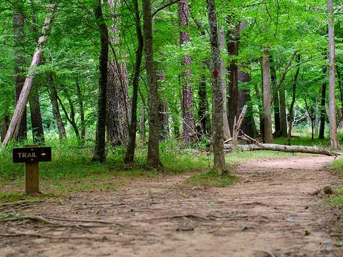 Eno River State Park Trails Image