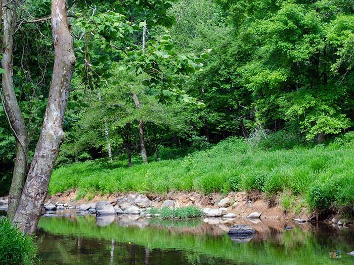 NC State Parks Eno River Durham NC Image
