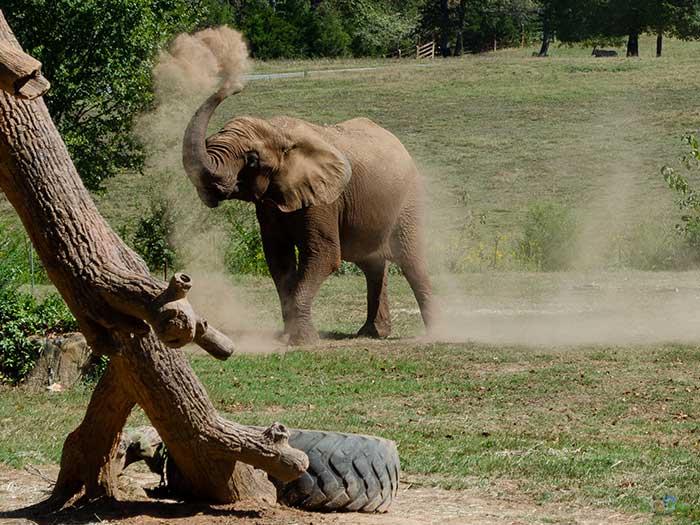 Asheboro Zoo Places to Visit in North Carolina Image