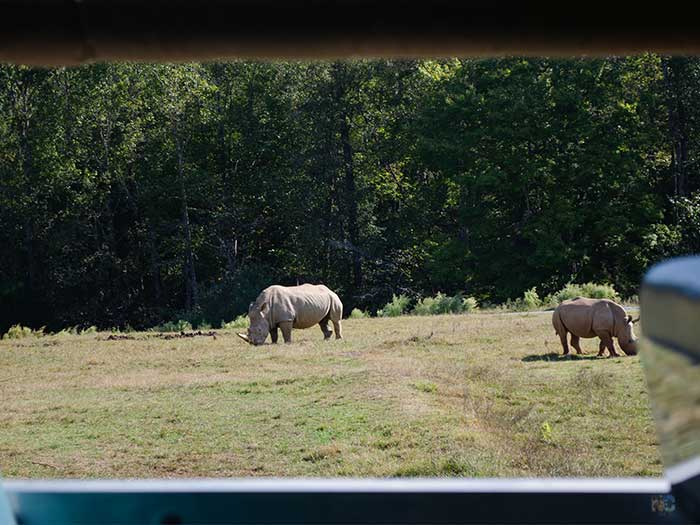 Things to Do in Asheboro NC Zoo Image