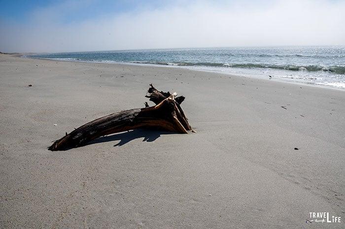 Beaufort NC Rachel Carson Reserve Bird Shoal Beach Image