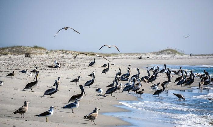 Bird Shoal NC Image