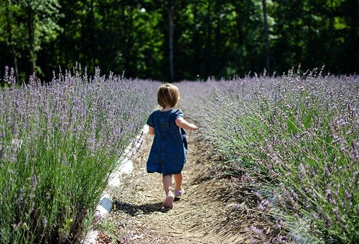 Chapel Hill NC Lavender Oaks Farm Image