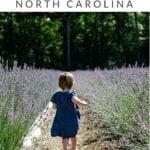 Chapel Hill Pinterest Image 6