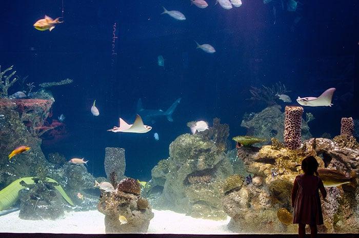 Aquariums in Greensboro NC Science Center Image