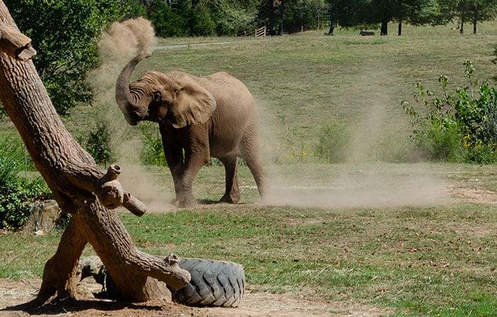 Elephants at the North Carolina Zoo Asheboro Image