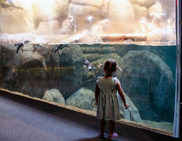 Greensboro Natural Science Center Aquarium Image