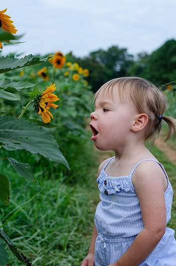 kid-friendly Events in North Carolina Raleigh Sunflower Fields Image