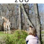 NC Zoo Pinterest Image 3 1