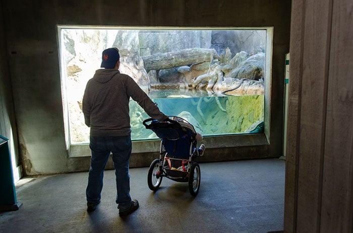 North Carolina Zoo Asheboro NC Image