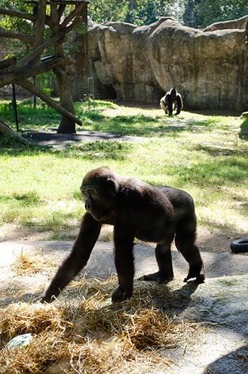 North Carolina Zoo Exhibits Image