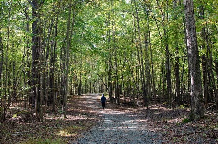Carolina North hiking trail