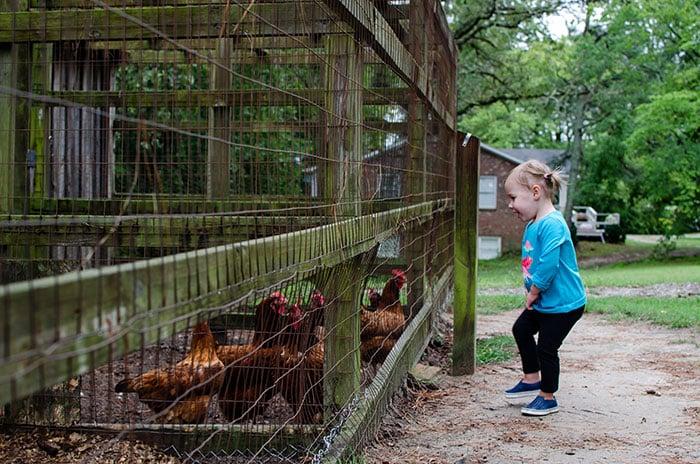 Fayetteville Gillis Hill Farm