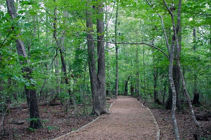 Hemlock Bluffs Nature Preserve Cary NC