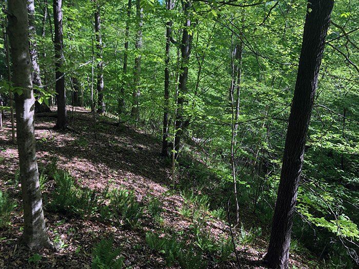Hiking near Raleigh NC Hemlock Bluffs Nature Preserve Cary