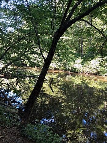 Occoneechee Mountain State Natural Area Eno River NC