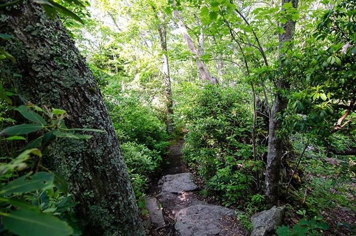 Hiking Beacon Heights