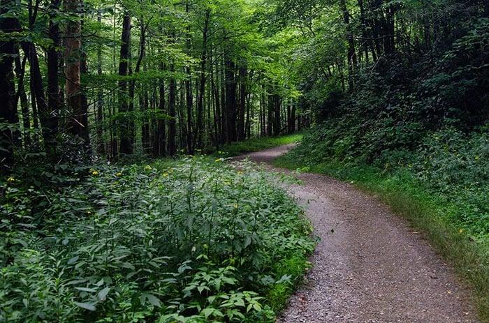 Trail for Roaring Fork Falls