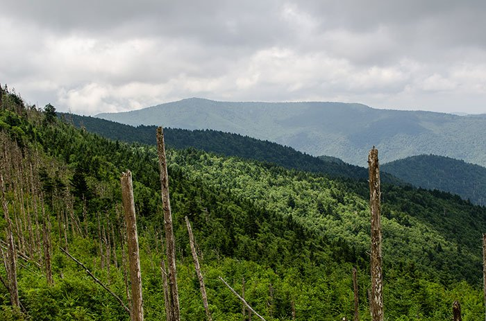 Mount Mitchell State Park near Roaring Fork Falls NC