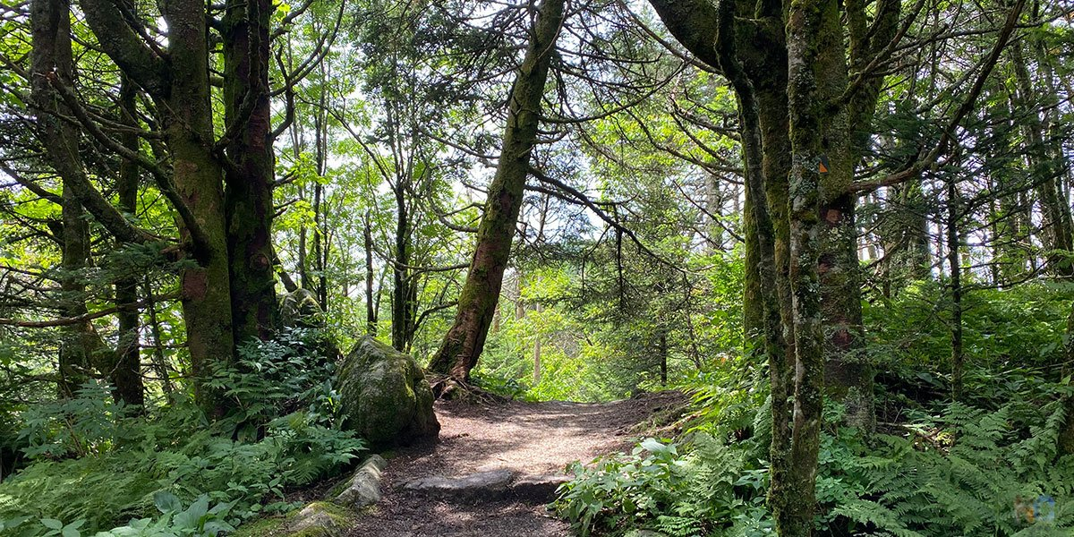 Our guide shares some of our favorite Black Mountains hikes, along with the best.