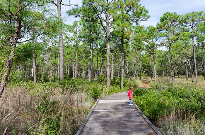 Carolina Beach State Park things to do in Wilmington