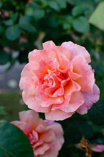 Flowers at Reynolda Outdoor Attractions in Winston Salem
