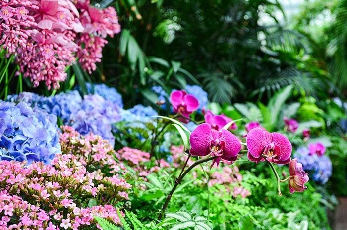 Biltmore Botanical Gardens in NC