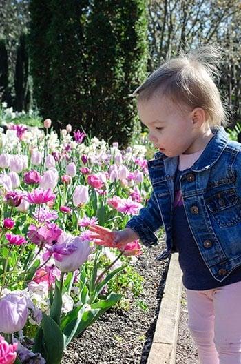 Duke Gardens Botanical Gardens in NC