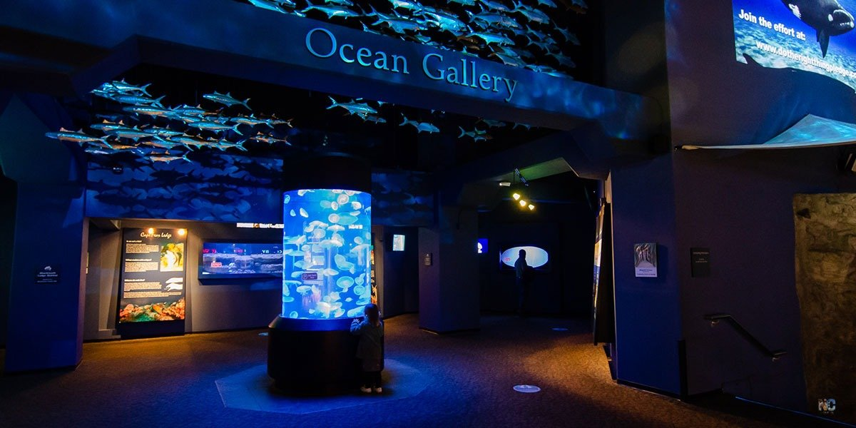 Our guide shares all you need to know about the North Carolina Aquarium at Fort Fisher and why you'll love it!