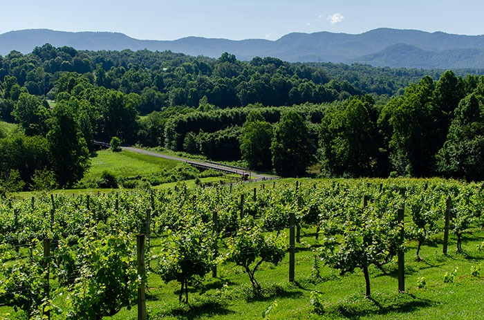 Vines at Silver Fork NC Wineries