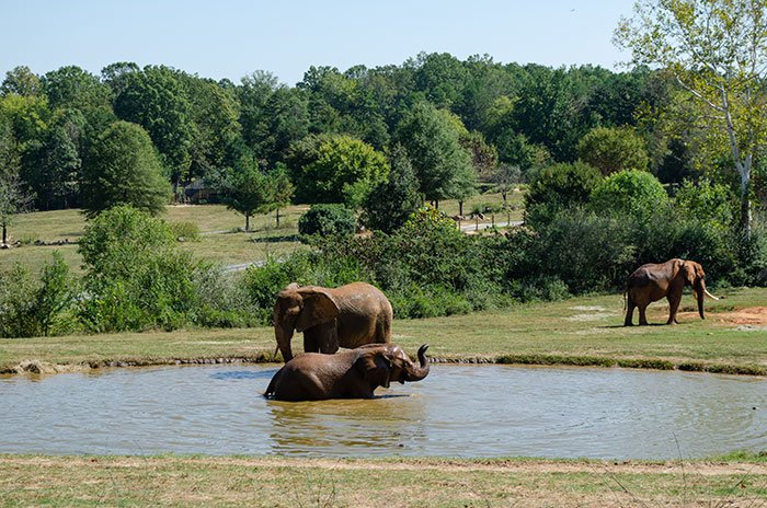 Weekend Getaways in North Carolina NC Zoo
