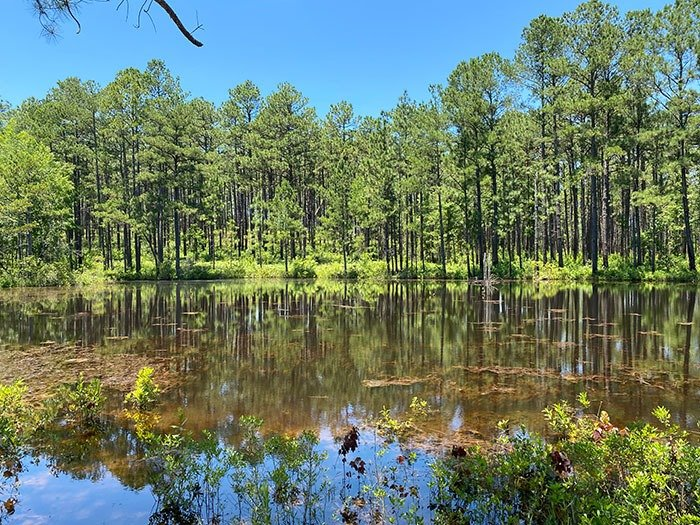 Day Trips from Greensboro NC Carvers Creek State Park