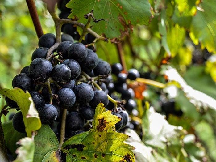North Carolina Wineries and Vineyards Grandfather Banner Elk