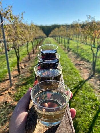 Divine Llama Yadkin Valley Wineries NC